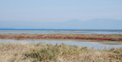 Flamingoes in Attica — where you can see them