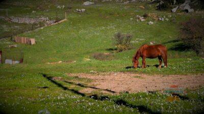Attica: an excursion to Dervenohoria