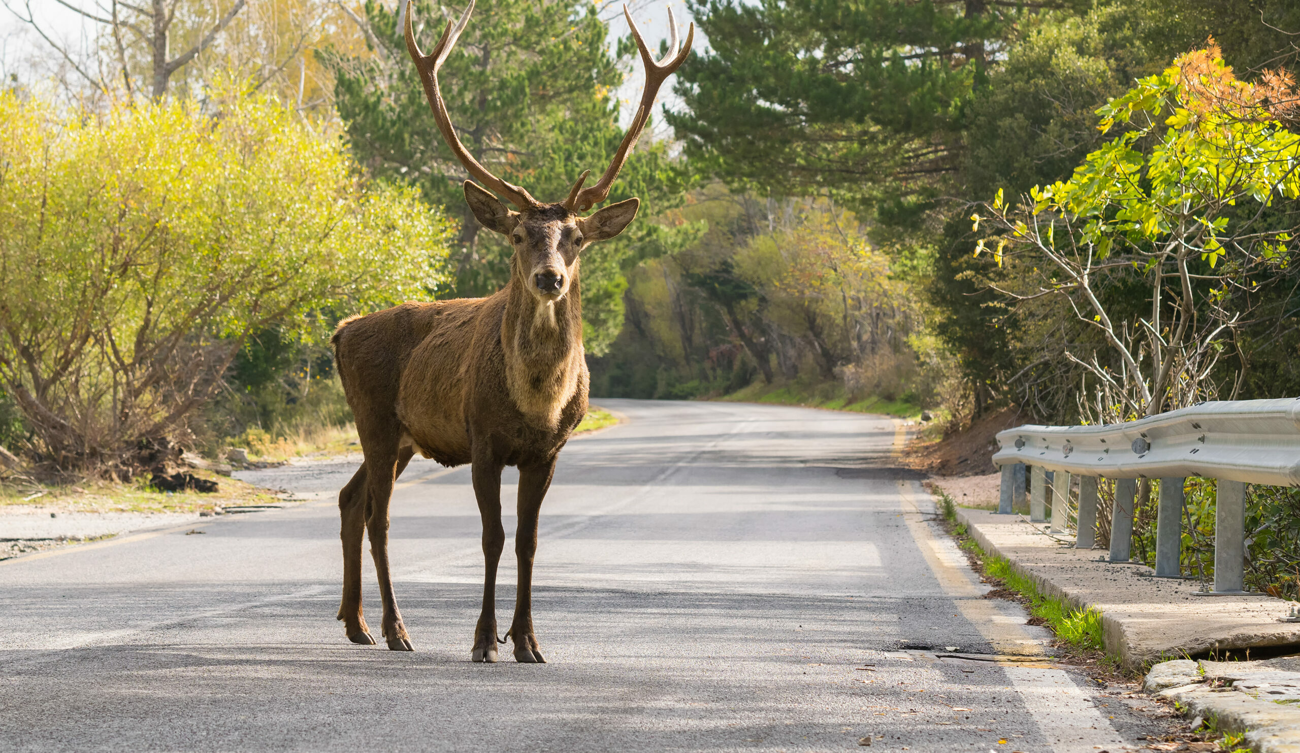 Attica: Mount Parnitha and its red deer